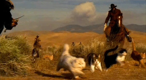 Call to action examples cowboys herding cats on horseback