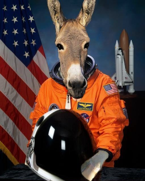Content amplification donkey in a spacesuit
