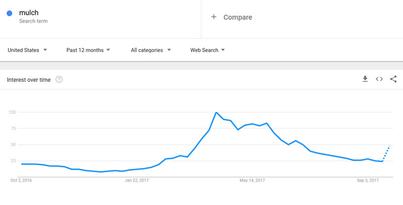 using google trends