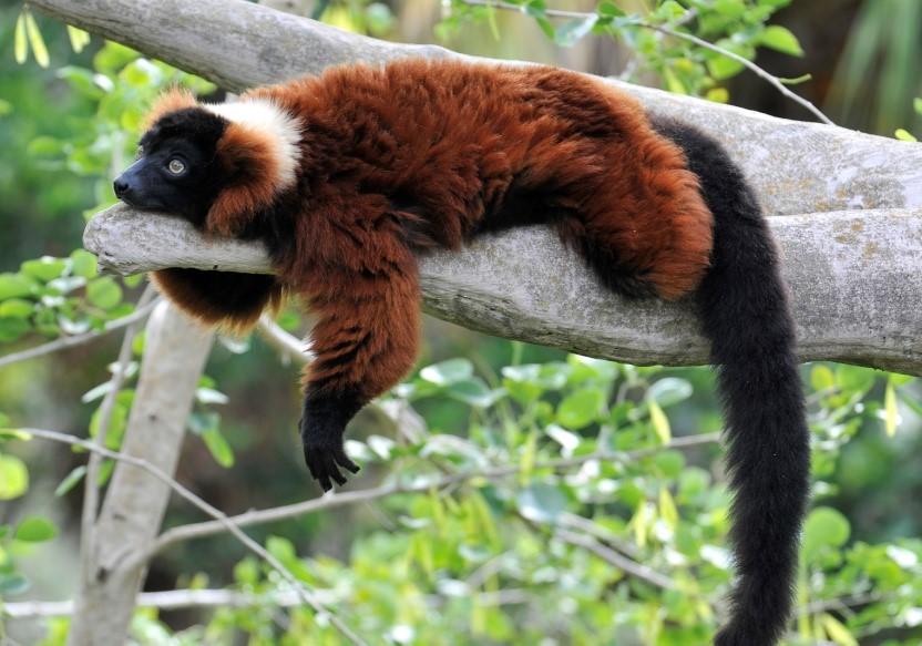 long tail keyword myth