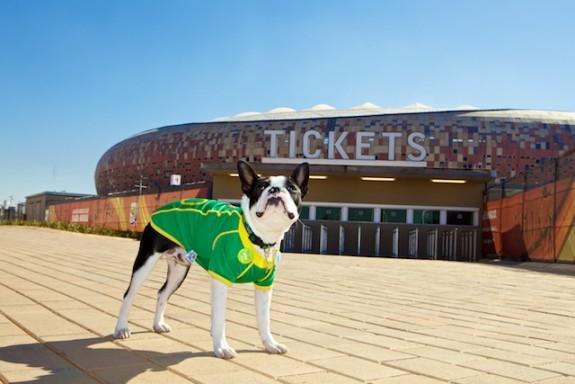 Ambush marketing Sepp Blatter Boston Terrier