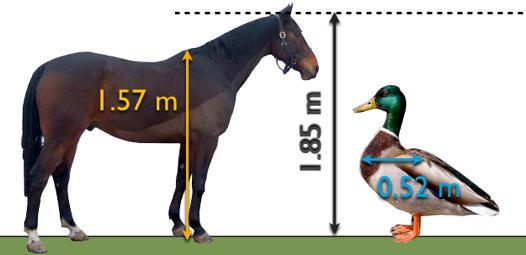 duck vs. horse