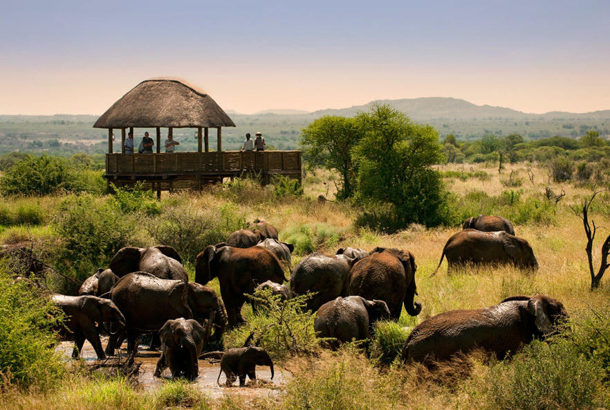 Go2Africa Customer Spotlight safari expedition