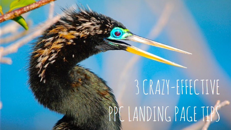 ppc landing page tips