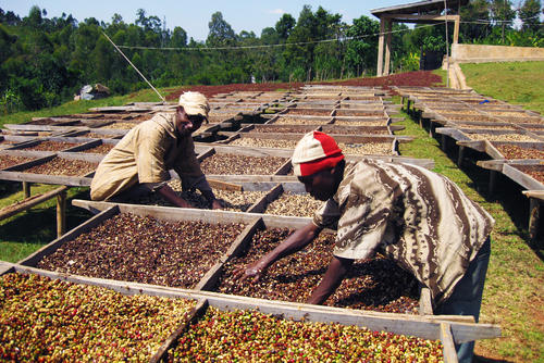 Ethical marketing Conscious Coffees affiliated coffee growers