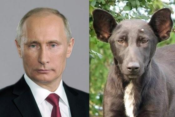 Facebook advertising cost Putin dog lookalike