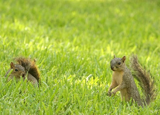 Home improvement advertising image of squirrels