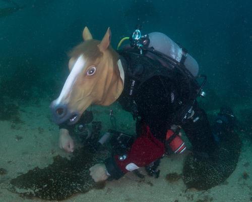 horse head mask photos