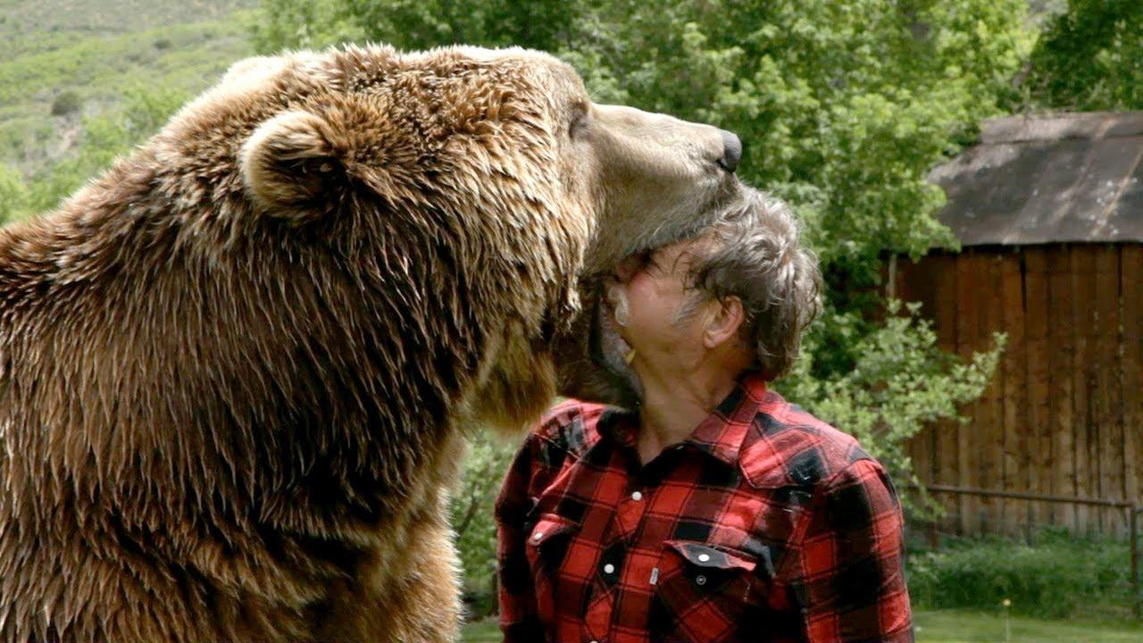 Improve my writing skills bear attack