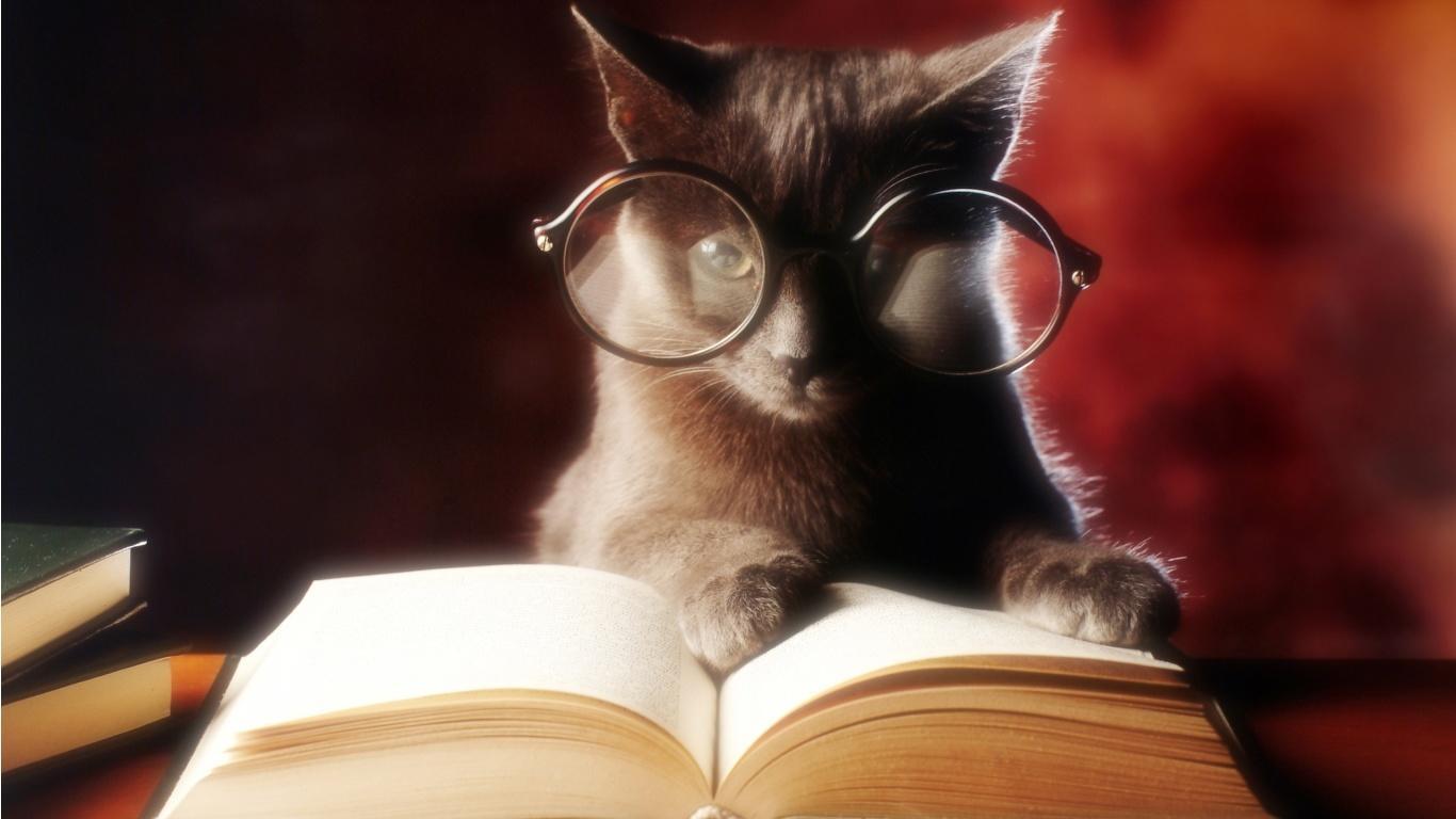 Improve my writing skills cat reading book