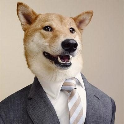 Improve your linkedin profile dog wearing suit