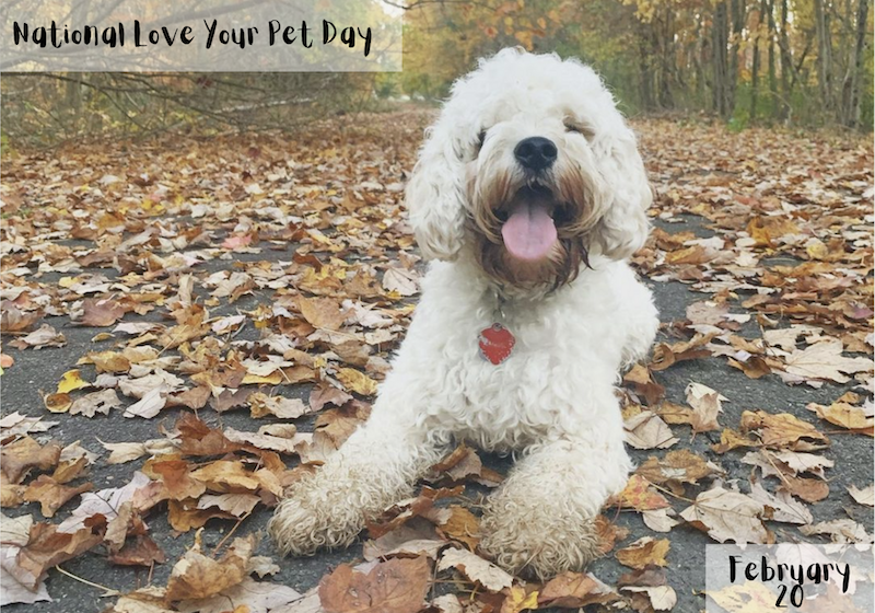 febtusty marketing ideas love your pet day
