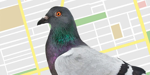 Google Fred Update Pigeon