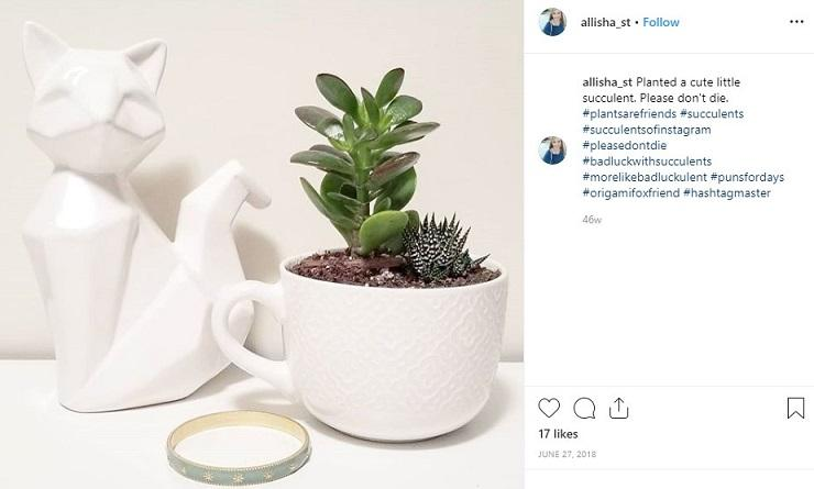 instagram hashtag post with succulents