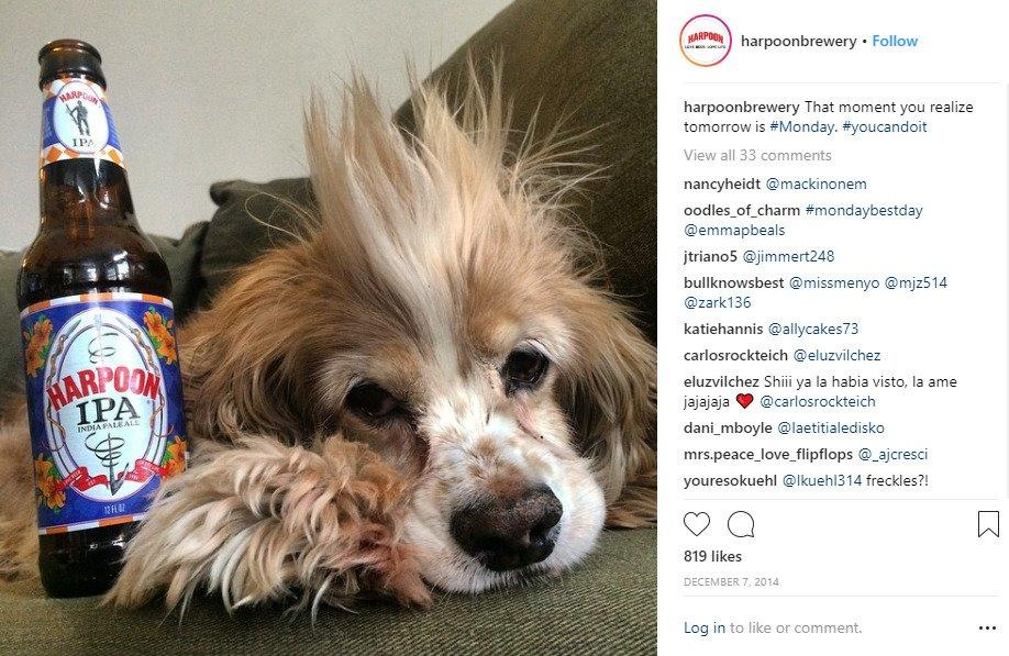 harpoon-dog-post-instagram-marketing