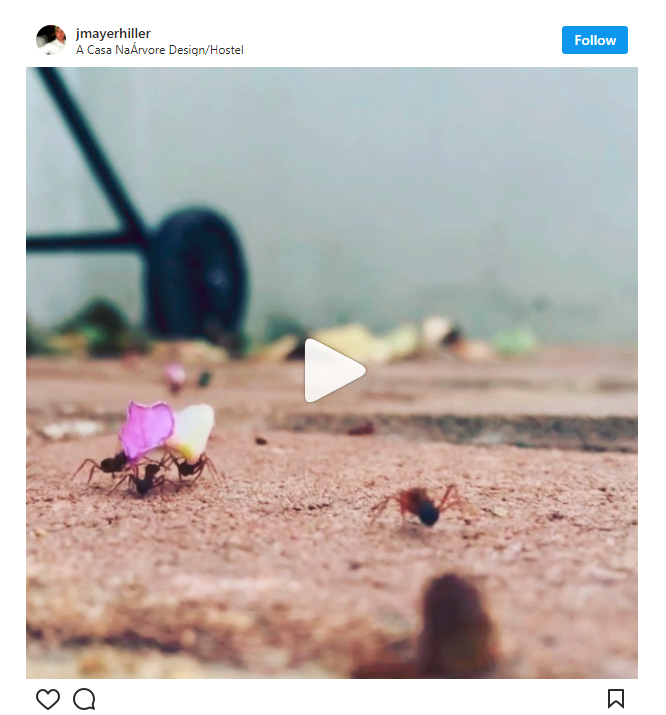 Instagram Videos Hyperlapse