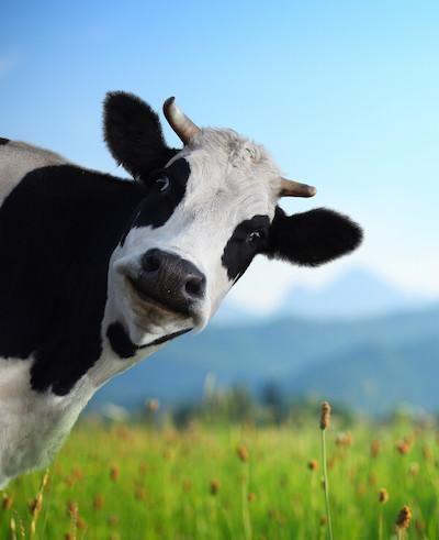 july marketing ideas cow appreciation day