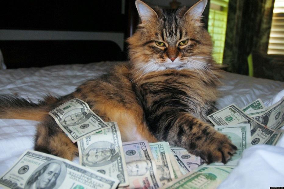 budget cat
