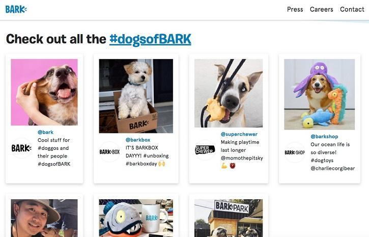 Bark startup landing page