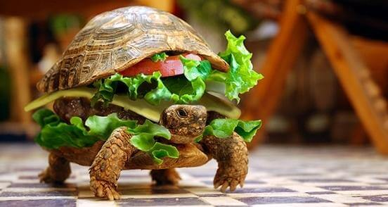 Native advertising examples turtle disguised as a cheeseburger