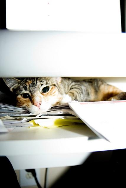 ppc agency strategies photo of a cat hiding under a desk