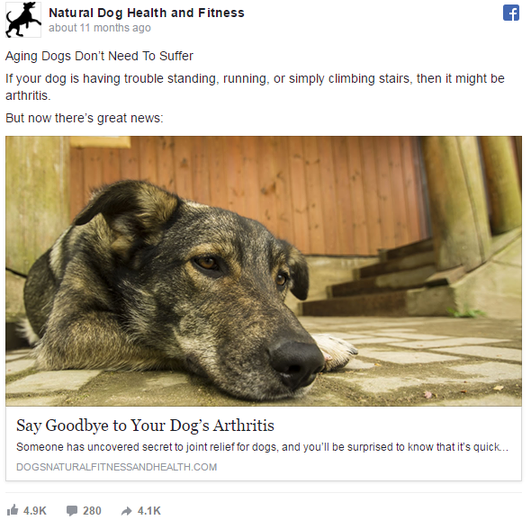 Psychology of Facebook ads dog ad example