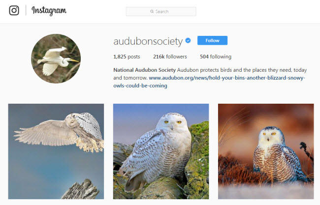 Social media for nonprofits Audubon Society Instagram
