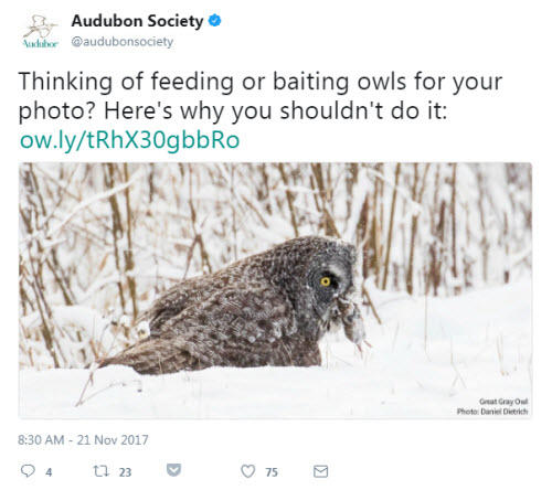 Social media for nonprofits Audubon Society example tweet