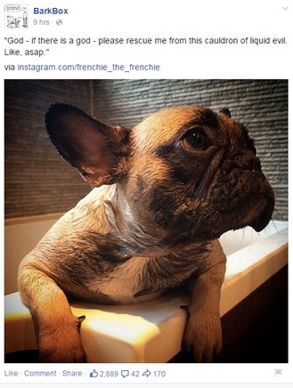 social media marketing plan barkbox instagram facebook post