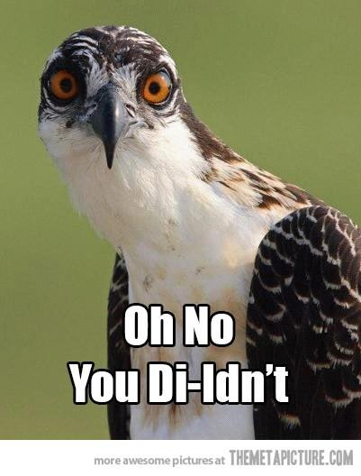 "Software Marketing image of an owl saying ""No you diIdn't."""